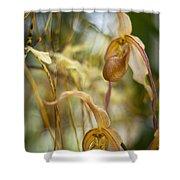 Graceful Orchids Shower Curtain