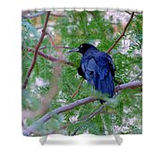Grackle On A Branch Shower Curtain