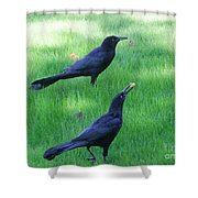 Grackles In The Yard Shower Curtain
