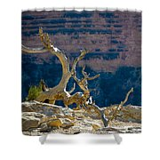 Grand Canyon Dead Tree Shower Curtain