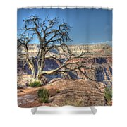 Grand Canyon Tree At Toroweap Shower Curtain