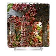Grape Leaves On Columns Shower Curtain