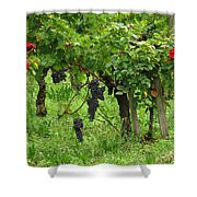 Grape Vines And Roses I Shower Curtain