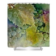 Grapes II Shower Curtain by Judy Dodds