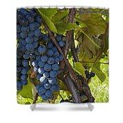 Grapes On A Vine Sutton Junction Quebec Shower Curtain