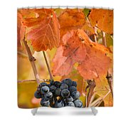 Grapes On The Vine - Vertical Shower Curtain