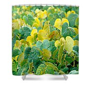 Grapevines In Azores Islands Shower Curtain