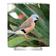 Grass Finch Shower Curtain