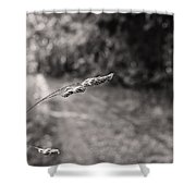 Grass Over Dirt Road Shower Curtain