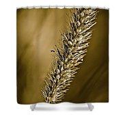 Grass Seedhead Shower Curtain