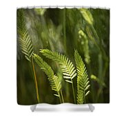 Grass Stems And Seed No.2129 Shower Curtain