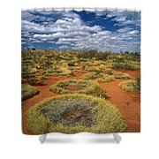 Grass Triodia Sp Covering Sand Dunes Shower Curtain