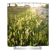 Grasses On A Nebraska Farm Shower Curtain