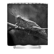 Grasshopper And Grunge In Black And White Shower Curtain
