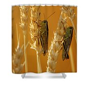 Grasshoppers On Wheat, Treherne Shower Curtain