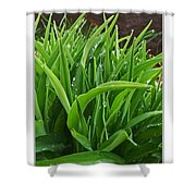 Grassy Drops Shower Curtain