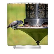 Gray Feathered Shower Curtain