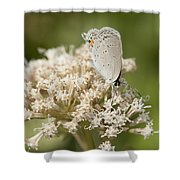Gray Hairstreak Butterfly On Milkweed Wildflowers Shower Curtain