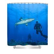 Gray Reef Shark With Divers, Papua New Shower Curtain