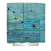Gray Seals At Chatham - Cape Cod Shower Curtain