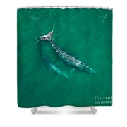 Gray Whale Mother And One-year-old Calf Shower Curtain