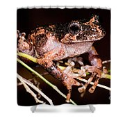 Gray Wood Frog Shower Curtain