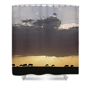 Grazing Cattle Silhouetted Shower Curtain
