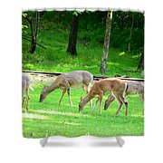 Grazing Doe Shower Curtain