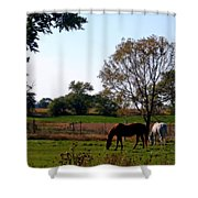 Grazing Horses Shower Curtain