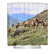Grazing In The Foothills Shower Curtain