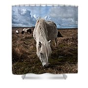 Grazing The Moor Shower Curtain