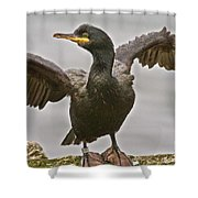 Great Black Cormorant Shower Curtain