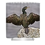 Great Black Cormorant II Shower Curtain by Heiko Koehrer-Wagner