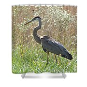 Great Blue Heron - Ardea Herodias Shower Curtain