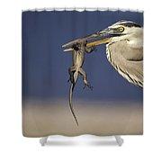 Great Blue Heron Ardea Herodias Preying Shower Curtain