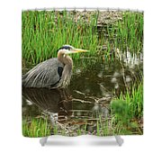 Great Blue Heron At The Marsh Shower Curtain