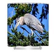 Great Blue Heron Concentration Shower Curtain
