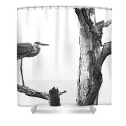 Great Blue Heron - Dead Pine Shower Curtain
