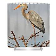 Great Blue Heron In Habitat Shower Curtain