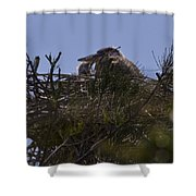 Great Blue Heron In Nest Shower Curtain