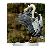Great Blue Heron Landing Shower Curtain