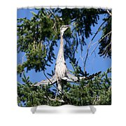 Great Blue Heron Meditation Pacific Northwest Shower Curtain
