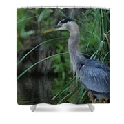 Great Blue Heron Painterly Shower Curtain