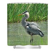 Great Blue Heron Shower Curtain by Paul Ward