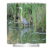 Great Blue Heron With Reflection Shower Curtain