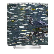 Great Blue Heron With Snack Shower Curtain