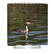 Great Crested Grebe With Breakfast Shower Curtain
