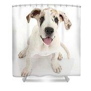 Great Dane Puppy Shower Curtain