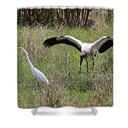 Great Egret And Wood Stork In The Marsh Shower Curtain