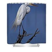 Great Egret, Casmerodius Albus, Perched Shower Curtain